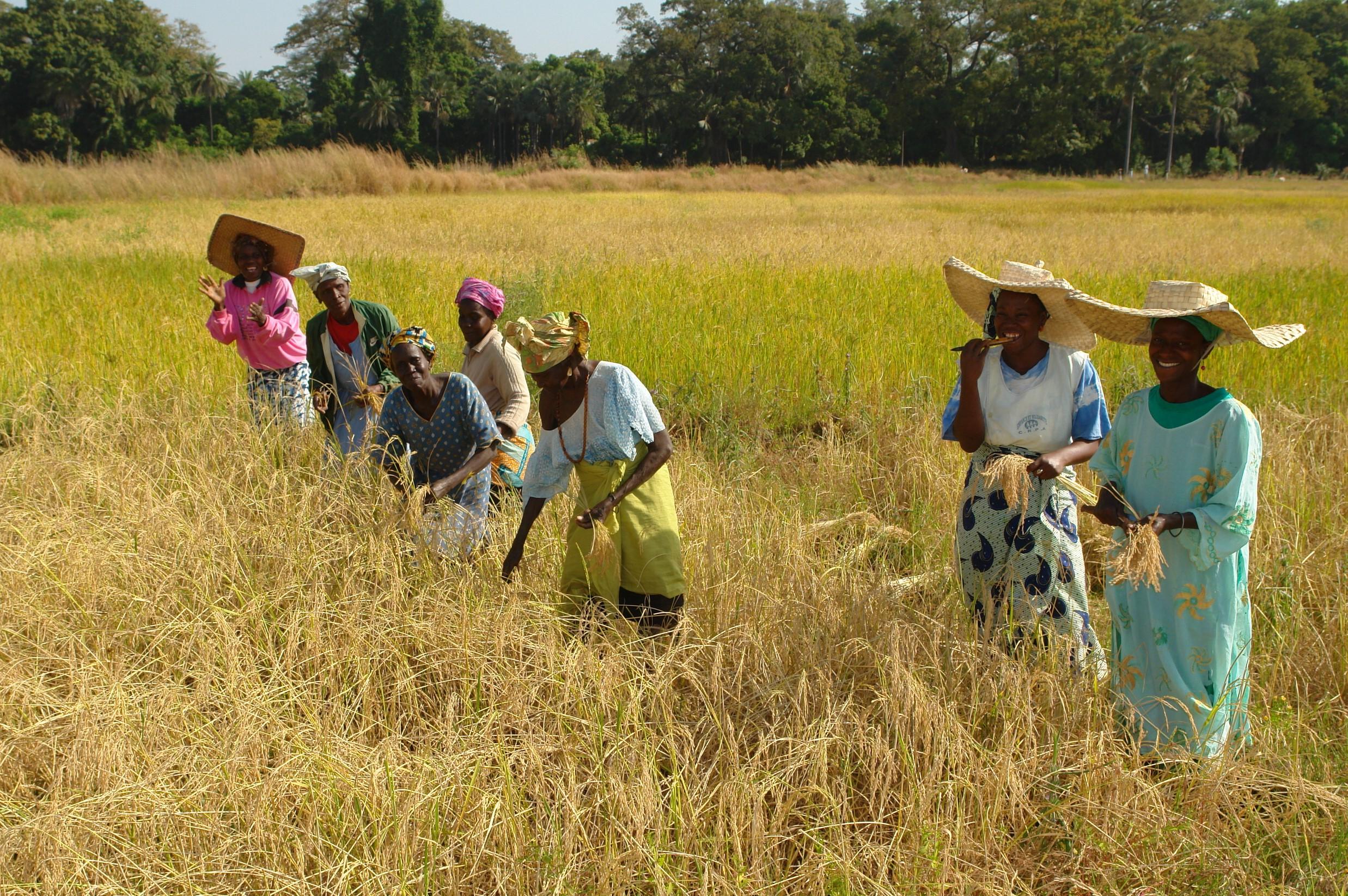 Agricultoras en África