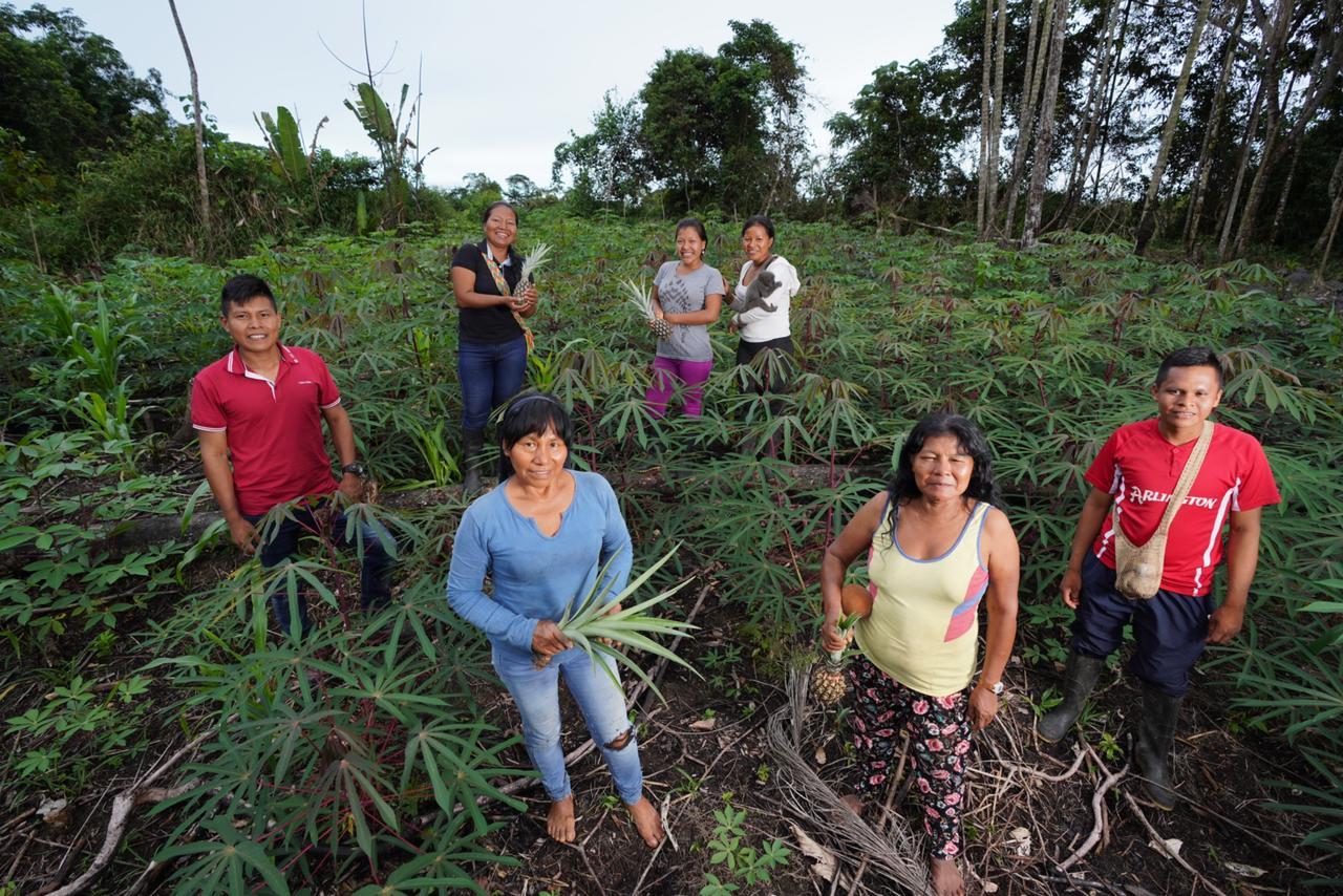Grupo para la producción apícola